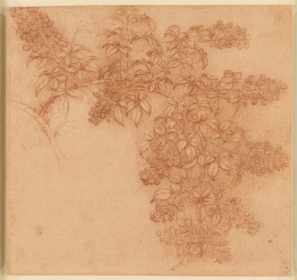 Blackberry Branch, Study, Da Vinci